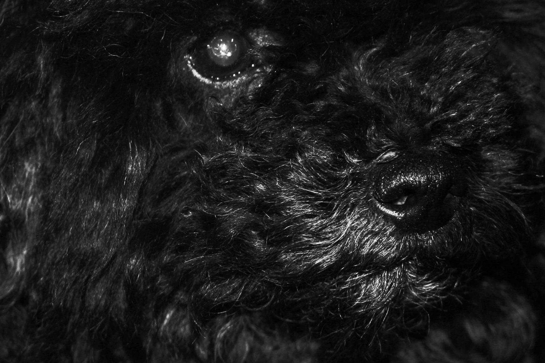 IMG_8655-dog-retouch